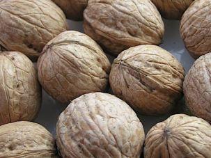 Artist's Rendering of Rabbi Tarfon's Mind: It was said in the Talmud that the rabbi was 'a heap of walnuts.'