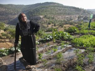 Deep Roots: A Palestinian farmer irrigates her land in the West Bank village of Battir.