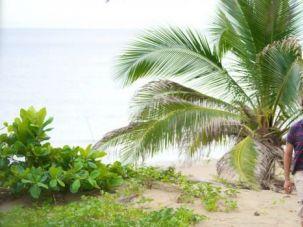 Just Beachy: Israeli developer Avihai David is building a beach town in Panama.