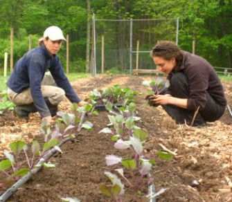 Harvest Time: Farm manager Debra Rich (left) and camp counselor Aliza Sandberg plant kale.