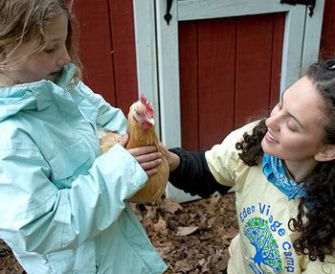 A camper holds a chicken, whose drop- pings are used to fertilize campgrounds.