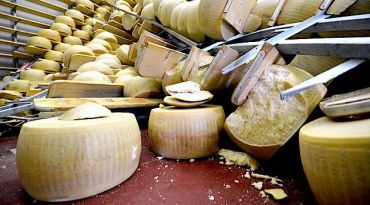 Wheels of Destruction: During an earthquake in Italy earlier this year, wheels of Parmigiano Reggiano came tumbling to the ground of warehouses where they were maturing.
