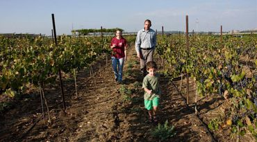 Walking Among the Vines: The only employees of Somek Winery are Barak Dahan and his wife. When the time comes to harvest the grapes, friends and volunteers gather to help out the family.