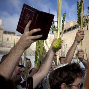 My Myrtle: Shaking Lulavs at Sukkot.