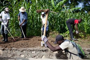 Images of cash for work team working on crops outside town of Sodo.