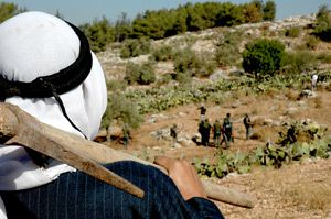In the Field: Nonviolent resistance is in the hands of olive farmers.