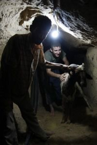Palestinians lead a goat through a Gaza tunnel.