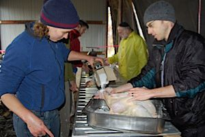Salting turkeys at the 2008 Food Conference